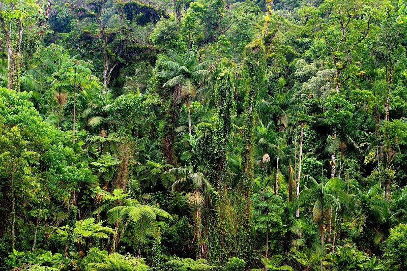 ConectCar faz parceria para fomentar o plantio de 4 mil árvores em área de preservação da Mata Atlântica
